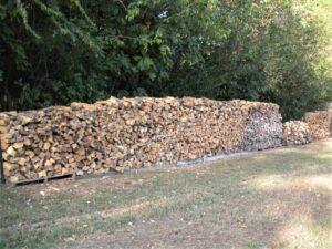 long pile of stacked firewood on pallets along treeline