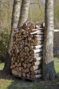 Firewood stacked between two trees on a wooden pallet