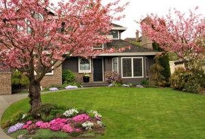 2 pink-blossomed trees in green lawn of front yard with house and landscaped flower garden